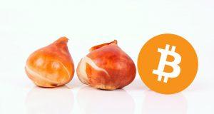 Symbolbild Bitcoin als Tulpenzwiebeln